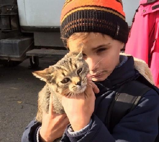 В Смоленске рабочие спасли котенка, просидевшего на ветке два дня (видео)