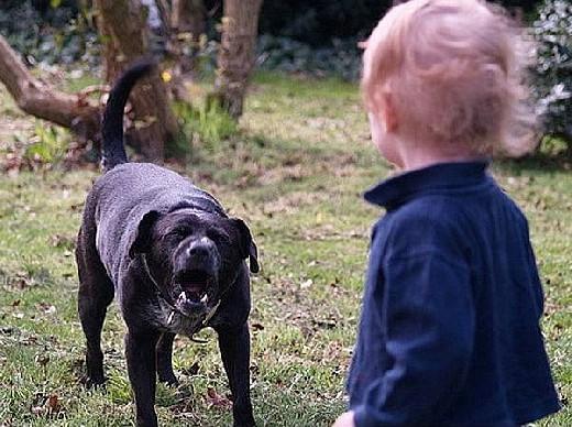 В России хотят начать наказывать владельцев собак за нападение на людей
